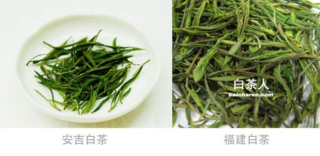 安吉白茶与福建白茶的区别