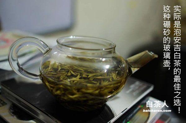 安吉白茶的泡法