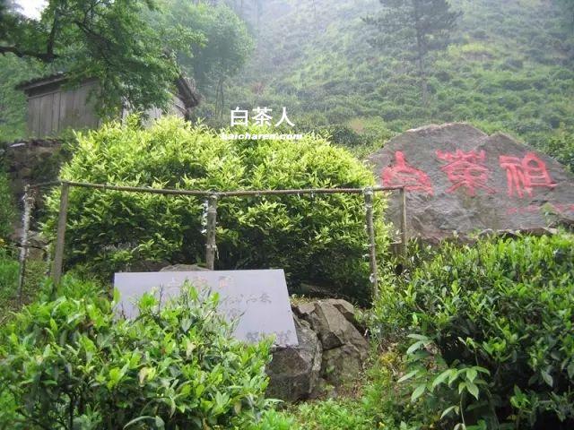2016中国安吉白茶博览会方案图片